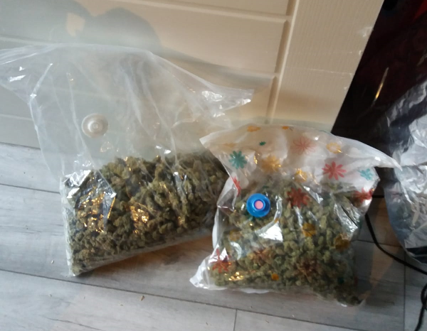 Cannabis PCTF.png